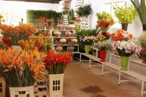 Flores, árvores frutíferas, plantas ornamentais: Expo & Flor acontece até domingo em Curitiba