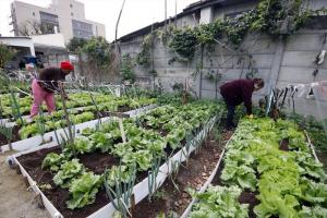 Horta orgânica comunitária faz brotar sabores em plena região Central de Curitiba