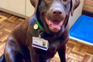 PUCPR dá crachá oficial para cão terapeuta da Escola de Ciências da Vida