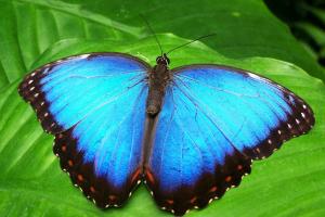 Observação de borboletas, Flash Mob saudosista...11 rolês diferentões para botar o bloco na rua neste final de semana!