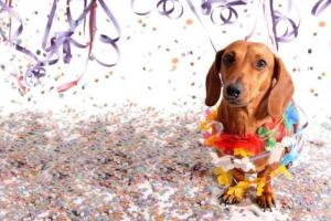 Pets de Curitiba ganham o bloco de carnaval. Saiba onde será o ´desfile´