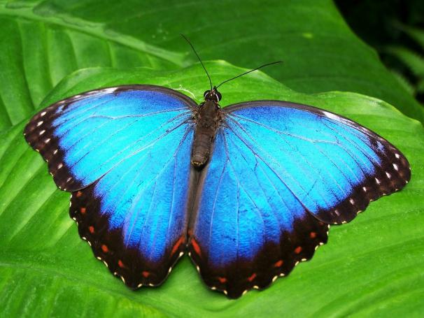 Observação de borboletas no Jardim Botânico é um dos destaques.