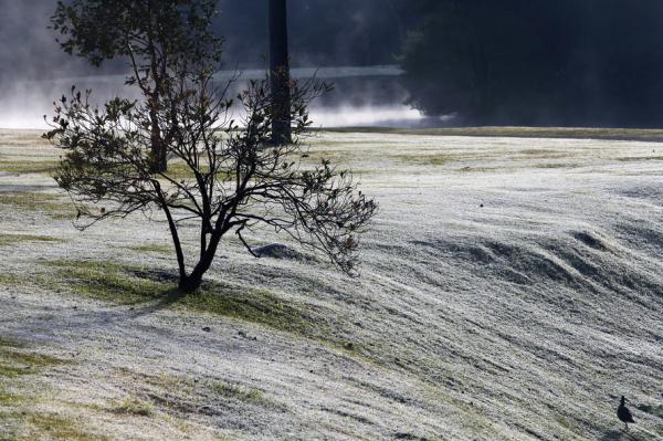 Simepar e Iapar iniciam Sistema Alerta Geada para produtores rurais nesta terça