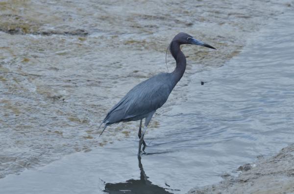 1fec3a8dfcb43 Portos do Paraná registram 45 mil aves nas baías de Paranaguá e Antonina