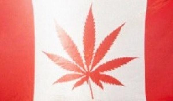 Bandeira usada por ativistas pr\u00f3 libera\u00e7\u00e3o da maconha no Canad\u00e1