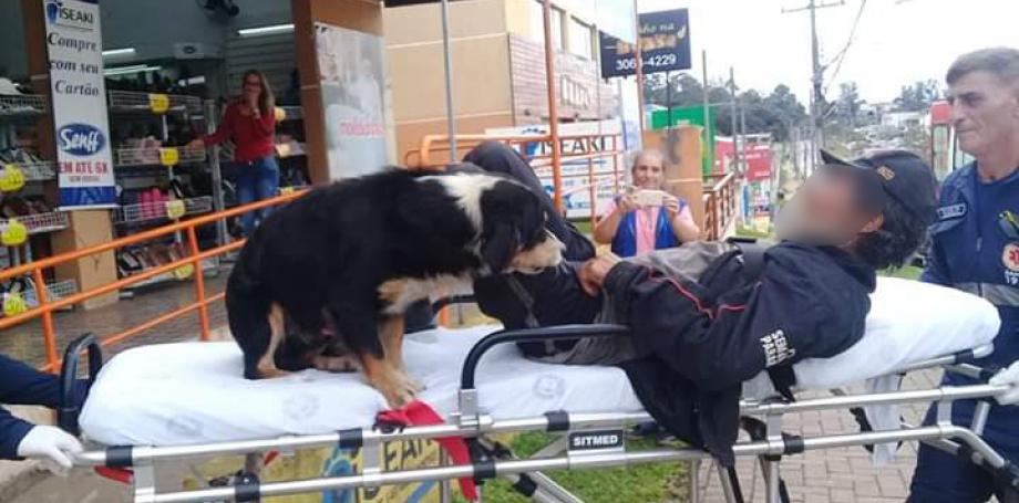 Resultado de imagem para Morador de rua passa mal e cães invadem ambulância com o dono até a UPA em Curitiba
