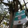 Espécie na Praça Tiradentes: placa indica que se trata de uma árvore imune de corte