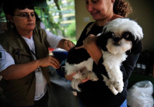 Objetivo é dar mais rigor na punição contra crimes de maus-tratos e abandono de animais no estado.