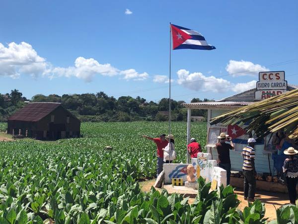 Plantações de tabaco em Pinar del Río a melhor terra do mundo para cultivo de tabaco