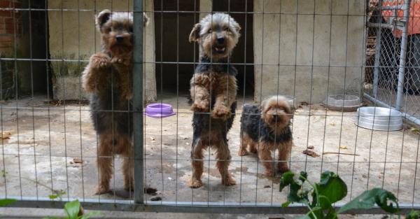 Divisão de Bem Estar Animal descobre canil clandestino em Pinhais - Bem Parana