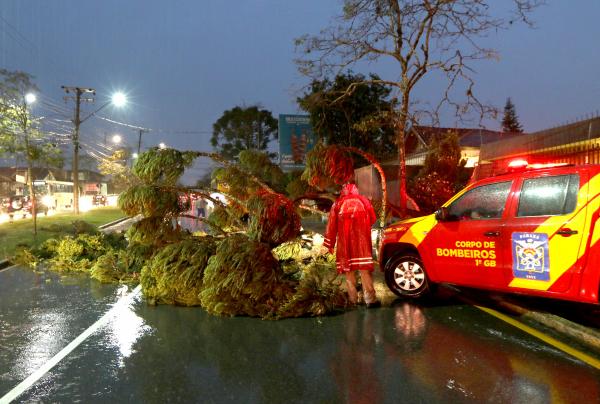 Árvores foram ao chão em diversos bairros da Capital, ontem