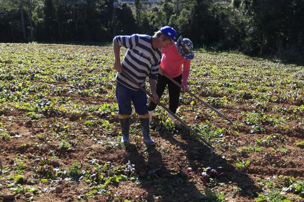 Frio do fim de semana afetou plantações na Grande Curitiba