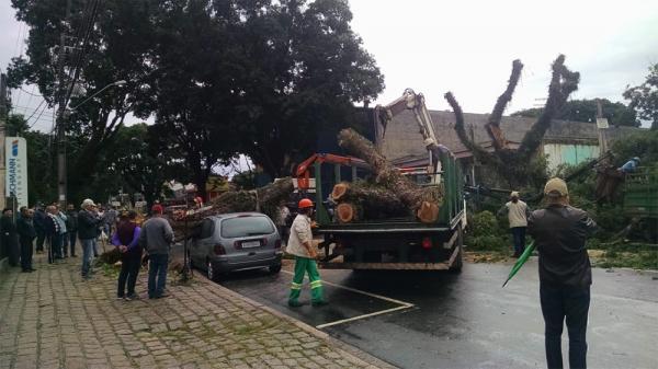 Queda de árvore no Bacacheri, ontem, bloqueou o trânsito