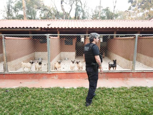Animais resgatados viviam em situação degradante