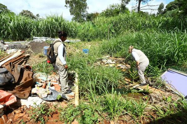 Paraná vê pior ano epidemiológico em casos e mortes por dengue