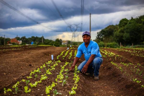 Horta comunitária Monteiro Lobato, no Bairro Tatuquara, ganha revitalização comteplando os moradores com novos canteiros para plantio de verduras e hortaliças