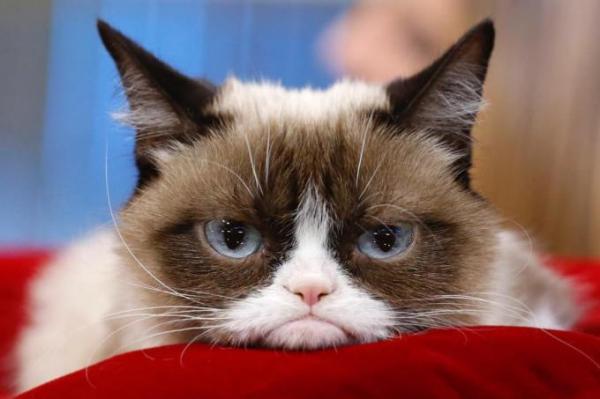 Grumpy Cat, que já foi considerado o gato mais rabugento do mundo.