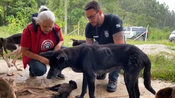 Cães resgatados em Agudos do Sul