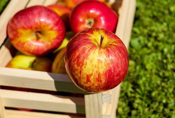 Maçã é a fruta da estação e rende boas receitas.