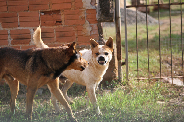 Rede de Proteção recebeu 1.704 denúncias de maus-tratos a animais no primeiro trimestre