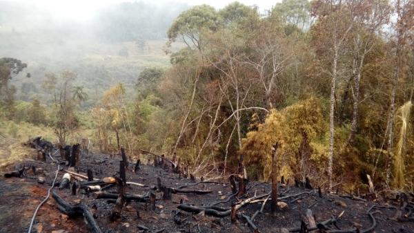 Operação flagra 688 hectares de floresta devastada ilegalmente no ...