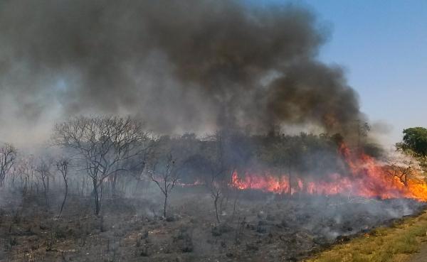 Elevado número de focos de queimadas na Amazônia neste ano, que já é 60% superior à média dos últimos três anos