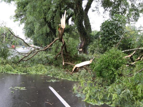 Temporal derrubou árvores, apagou semáforos e bloqueou vias em Curitiba nesta quarta