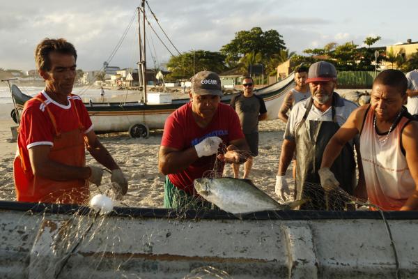 Uma boa manhã de pesca rende de 200 a 300 quilos de peixe, em média