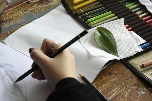 Desenhos sempre baseados em folhas