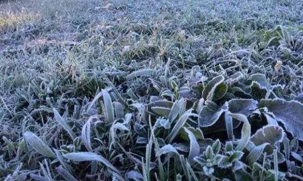 Com massa de ar frio, Paraná tem expectativa de geada. Saiba onde pode gear
