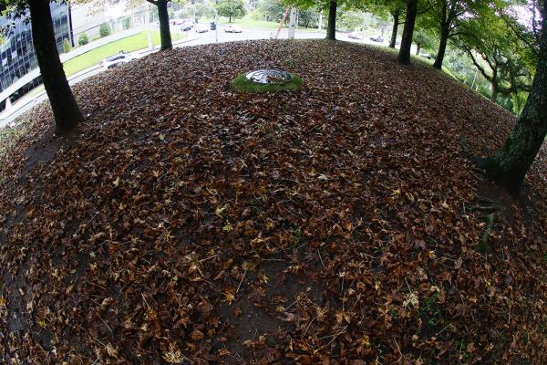 Folhas no chão no Centro Cívico: cenário típico de outono