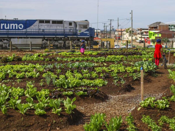 Horta urbana Folha do Pantanal, na Vila Pantanal, bairro Boqueirão