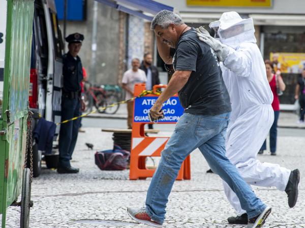 Ataque de abelhas no centro de Curitiba em novembro