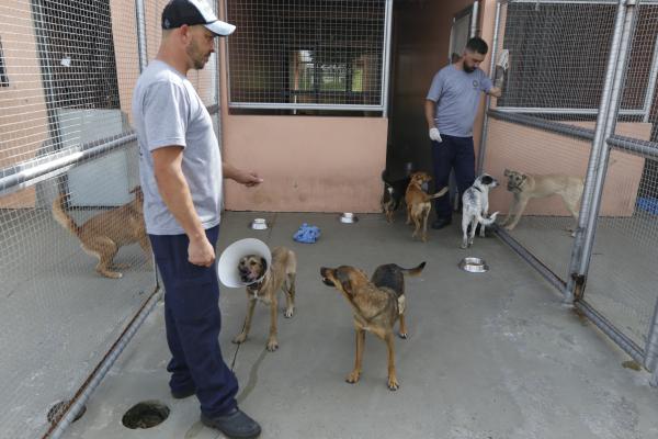 Cães resgatados pelo serviço de proteção animal da Prefeitura de Curitiba aguardam por adoção