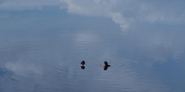 A vida das comunidades ribeirinhas na telona