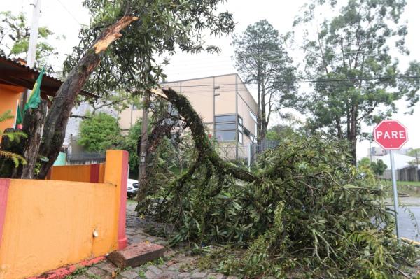 Árvore caída na Rua João Masschetto, no bairro Cajuru: vento forte