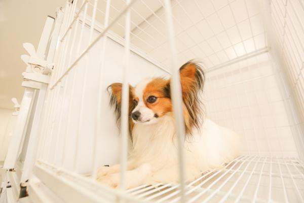 Segundo vereadora, o abuso contra animais de estimação pode ser um indicativo de violência doméstica