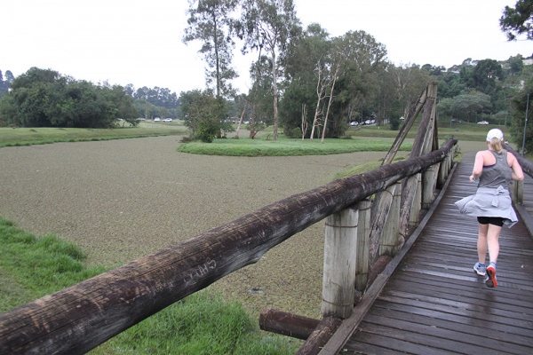 Algas invasoras 'encobrem' lago no Parque Tingui de Curitiba e trazem risco
