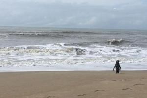 Rede colaborativa da UFPR lança desafio em defesa dos oceanos