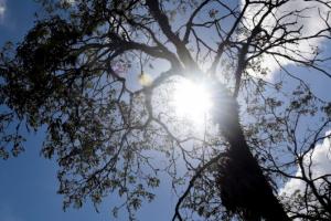 Sol aparece em Curitiba, mas temperaturas não sobem. Na sexta pode chover. Veja a previsão