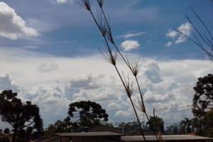 Fim de semana não terá chuva e deverá abrir estiagem em Curitiba