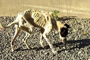 Mulher é presa por maus-tratos em Ponta Grossa; cachorra resgatada corre risco de morte