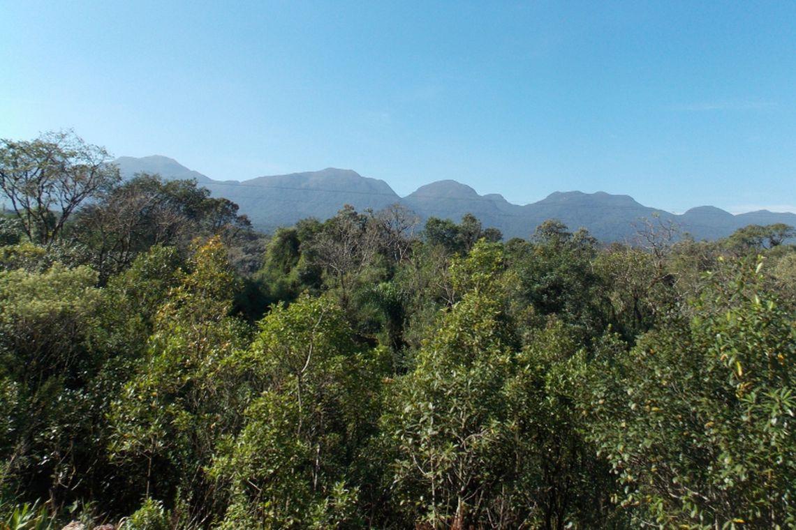 Paraná é o segundo estado com maior desmatamento de Mata Atlântica do País